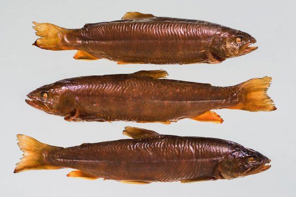 Räucherfisch fotografie