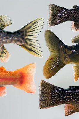 Schwanzflossen von Fischen