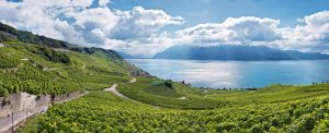 Laveaux Epesses schweiz landschaft sommer