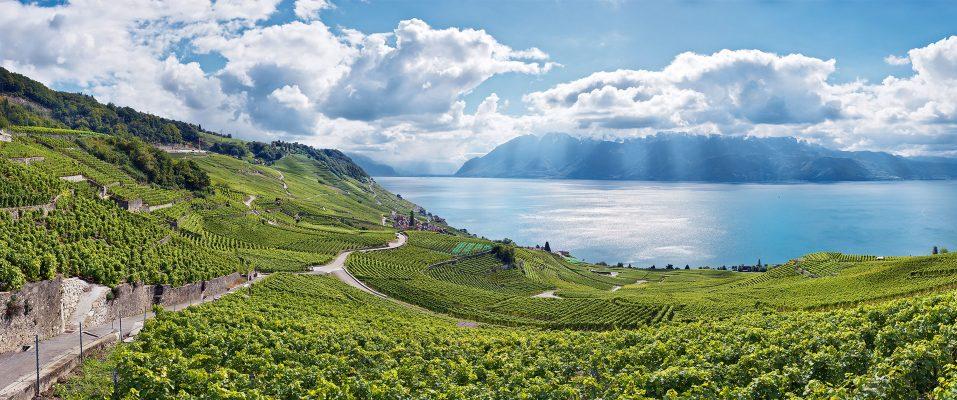 panorama landschaft laveaux mit weinbergen und genfersee
