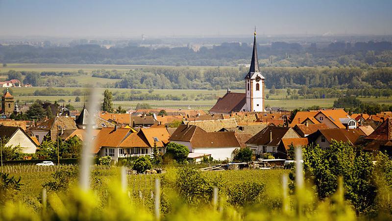 Rheinland-Pfalz landschaft weinberge